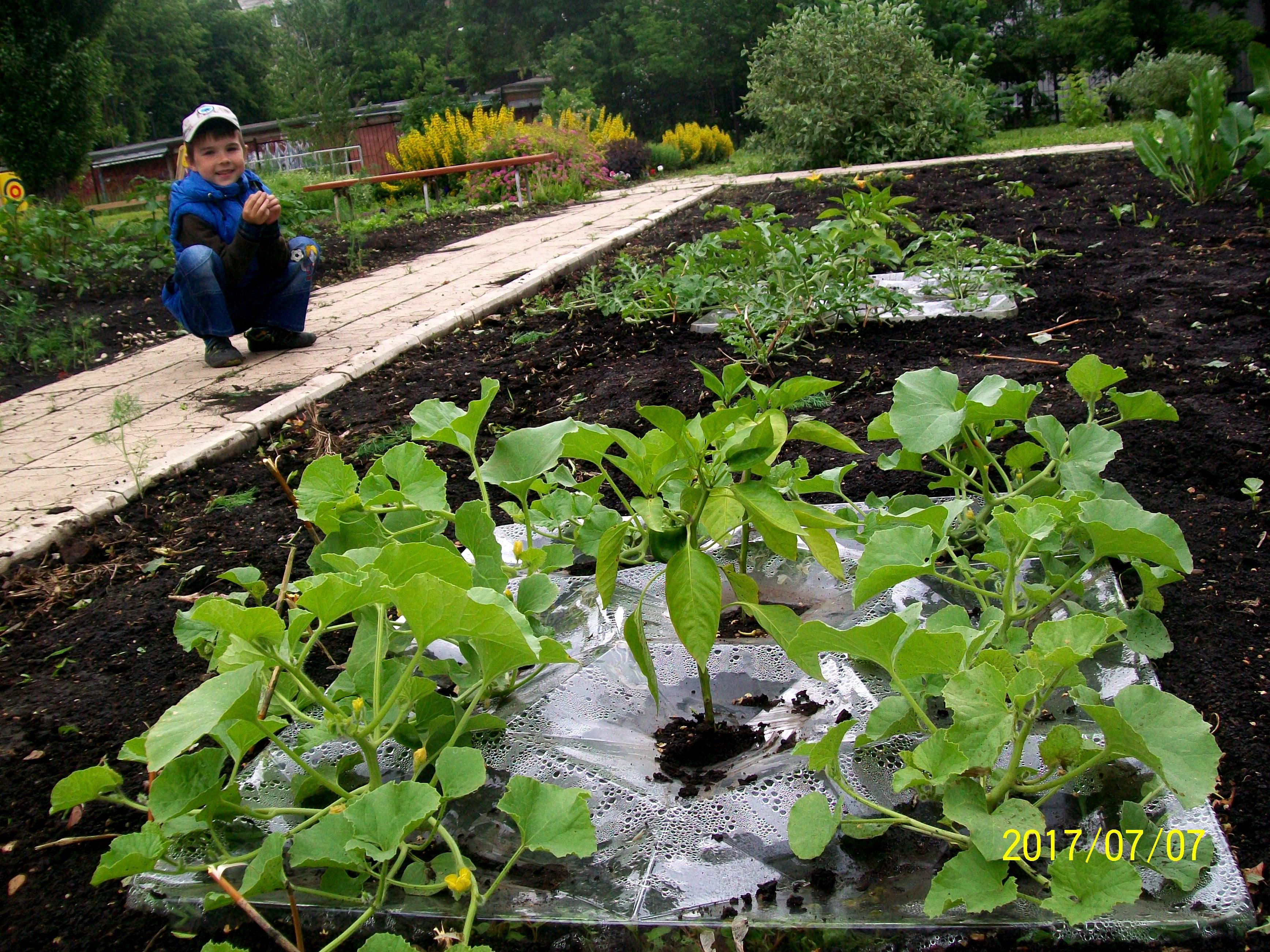 В детском саду в агропанелях растут арбузы, дыни и перцы